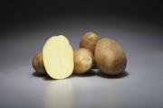 Немецкий семенной картофель