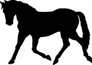 Куплю лошадь тяжелой породы (жеребец кобыла жеребенок )